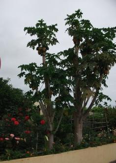 La Palma Urlaub 2015 081