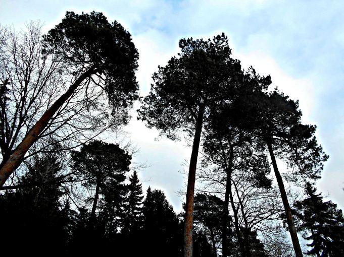 Bäume HDR