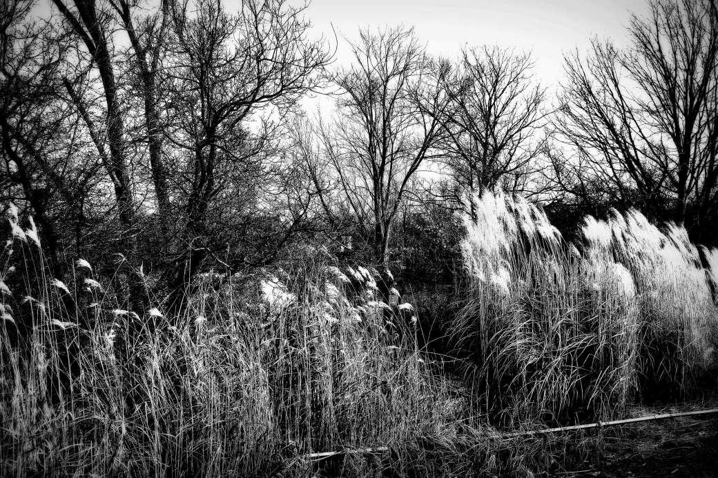 Gräser am See in schwarzweiss 2.jpg